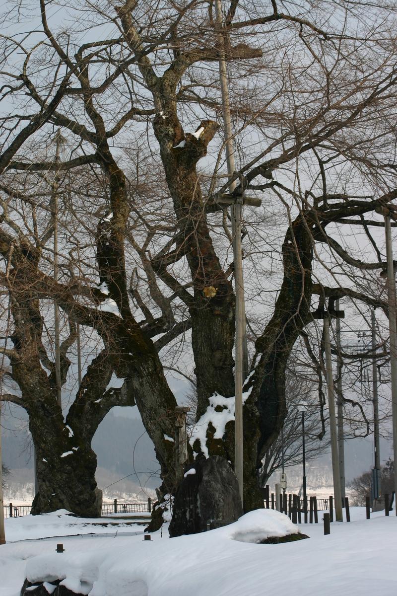 荘川町~国道156号線 御母衣ダム~世界遺産白川郷合掌集落 新緑が美しい4月下旬から5月 上旬に荘川桜が咲き始めます! ⑦