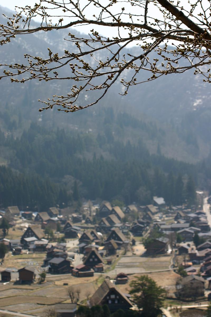 世界遺産 白川郷合掌集落~天守閣展望台~の桜のツボミは、 今、こんなです(n'∀')η ②