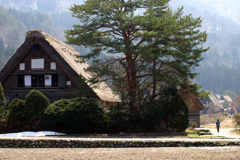 世界遺産 白川郷合掌集落~天守閣展望台~の桜のツボミは、 今、こんなです(n'∀')η ④