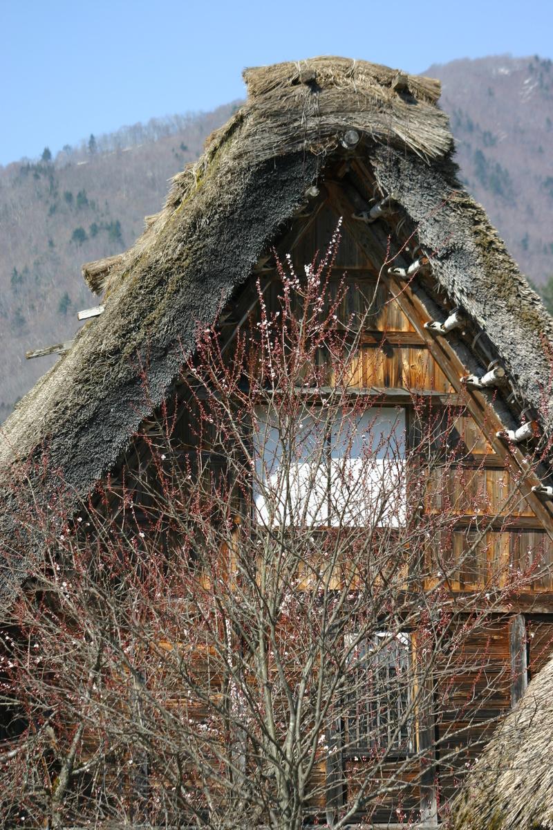 白川郷いよいよ桜の季節が到来!日本の春を満喫するならやっぱり桜&合掌造り風景 ③