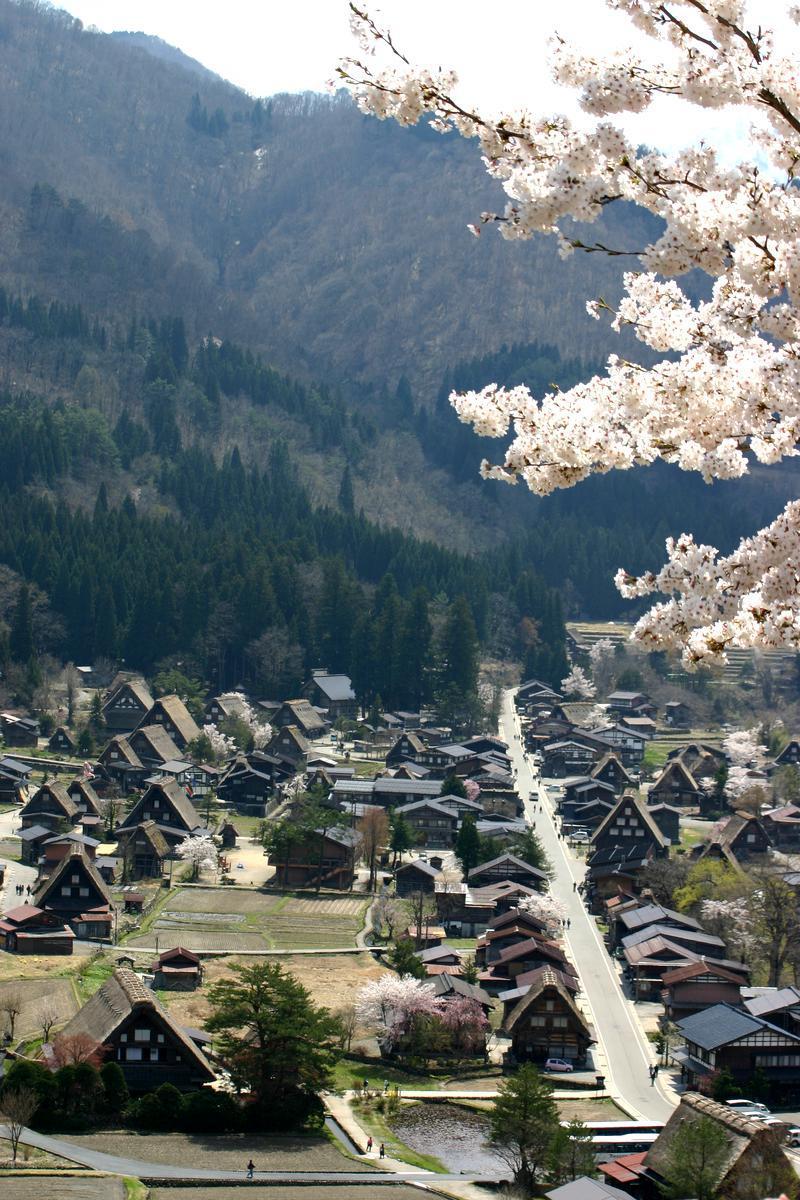 世界遺産 白川郷合掌集落は春爛漫~桜の季節がやってきました♪ ⑥