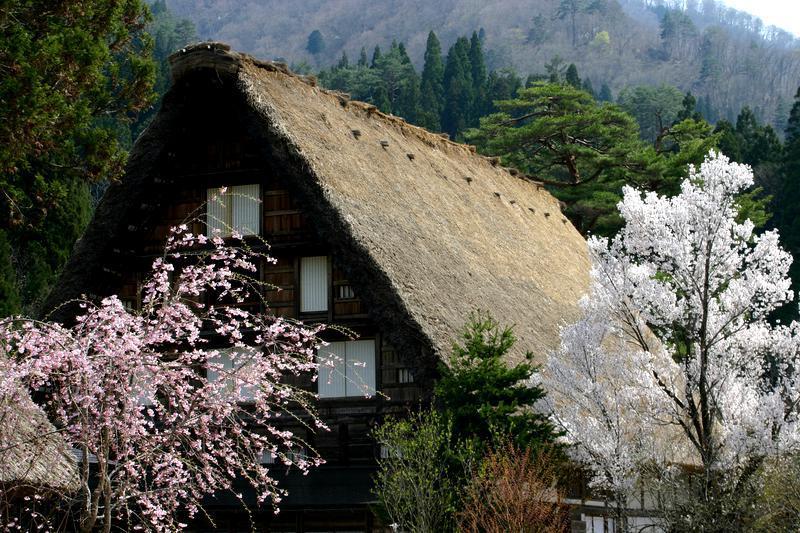 世界遺産 白川郷合掌集落は春爛漫~桜の季節がやってきました♪ ⑧