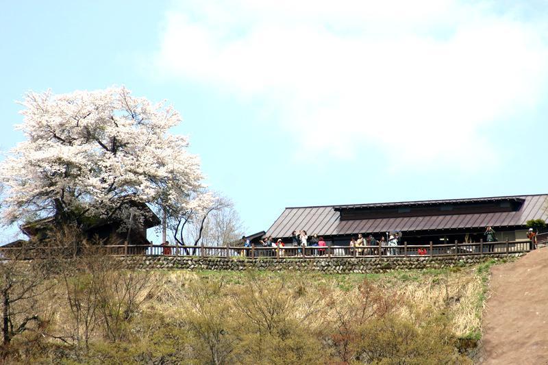 いよいよゴールデンウィーク♪♪♪4月26日(土)~5月6日(火)この大型連休はどう過ごしますか? 慌ただしい日常を少し離れて、サクラ咲く爽やかな風が吹き抜ける 白川郷の豊かな自然を満喫 ②
