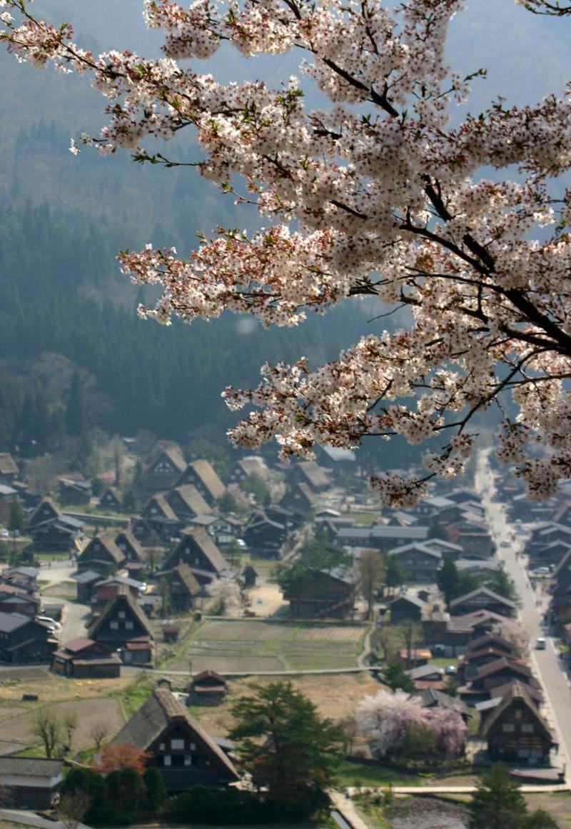 いつもとは違うスタイルで桜を楽しむなら、合掌造りとのお花見はいかが?ゴールデンウィークは世界遺産 白川郷へ ③