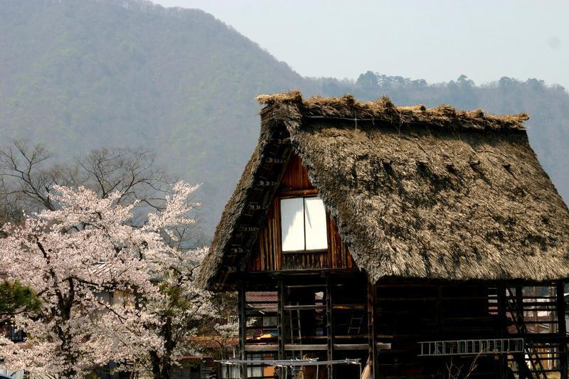 いつもとは違うスタイルで桜を楽しむなら、合掌造りとのお花見はいかが?ゴールデンウィークは世界遺産 白川郷へ ⑧