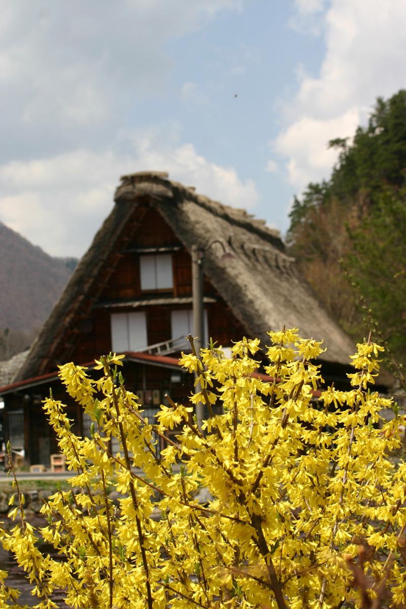 ゴールデンウィーク後半スタート桜の花が咲く世界遺産 白川郷!今年は飛び石連休となり、ちょっと旅行にはなあ・・・とお考えの皆様に♪ ⑦