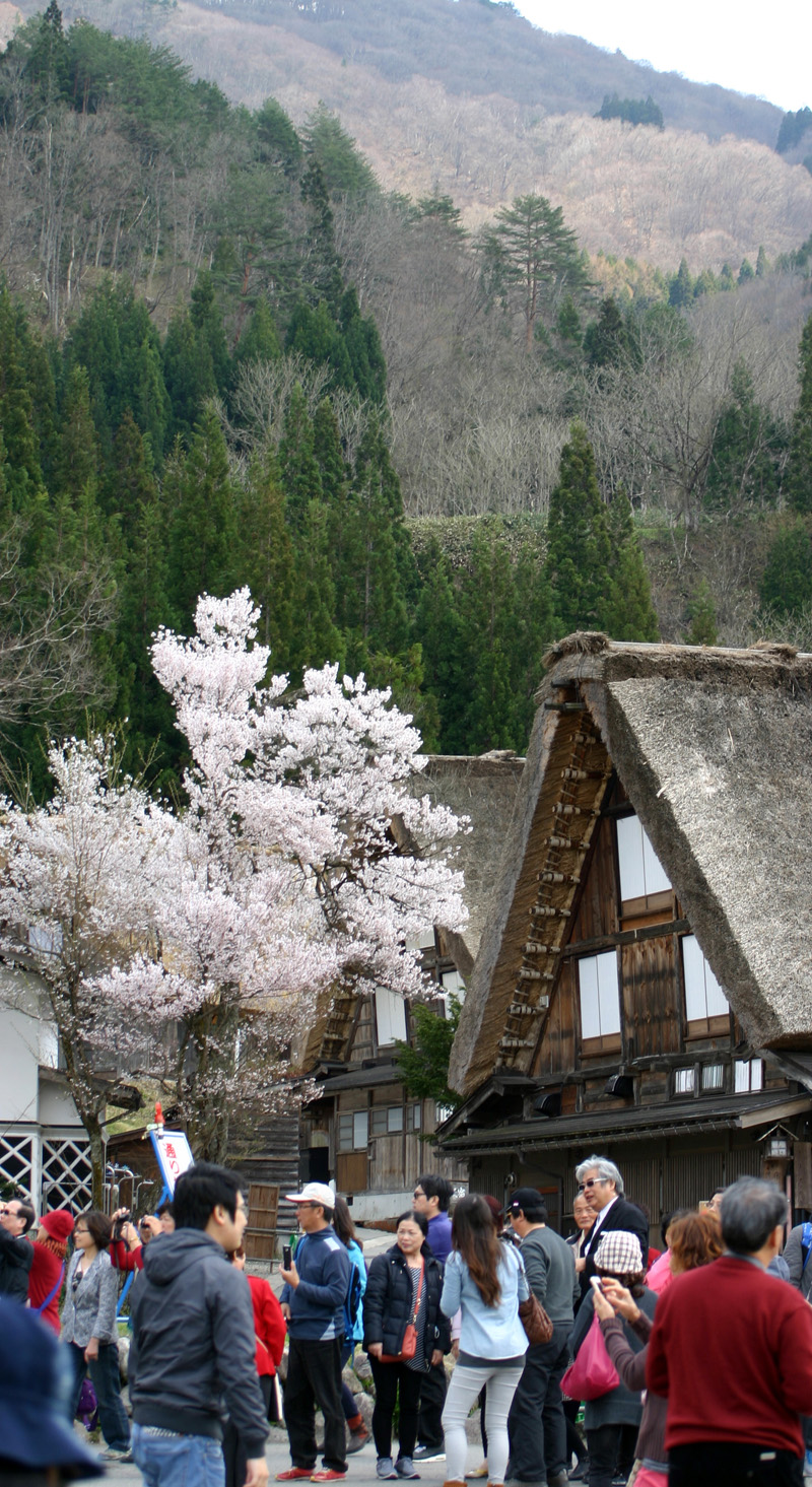 ゴールデンウィーク後半スタート桜の花が咲く世界遺産 白川郷!今年は飛び石連休となり、ちょっと旅行にはなあ・・・とお考えの皆様に♪ ⑫