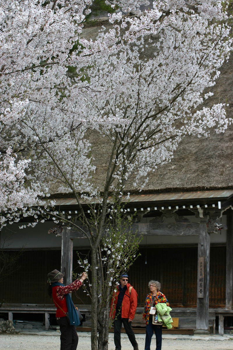 ゴールデンウィーク後半スタート桜の花が咲く世界遺産 白川郷!今年は飛び石連休となり、ちょっと旅行にはなあ・・・とお考えの皆様に♪ ⑬