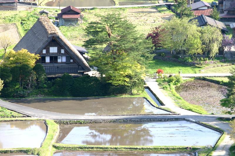 春から初夏の季節替わり~新緑が眩しい世界遺産 白川郷を満喫! ②