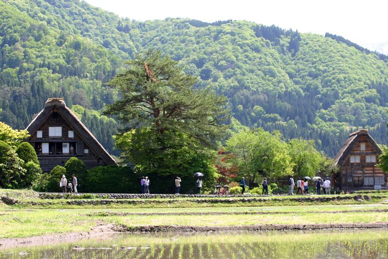 初夏は、ここ世界遺産で♪♪ 都会の雑踏を忘れ、自然豊かな「白川郷」に来ませんか!? ③