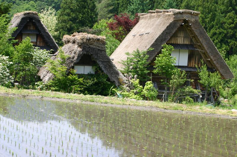 梅雨時ですが初夏真っ盛り~世界遺産 白川郷でお天気に負けないくらい心も体も晴れ晴れに! ⑤