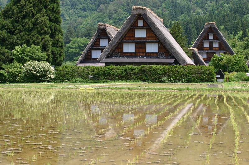 梅雨時ですが初夏真っ盛り~世界遺産 白川郷でお天気に負けないくらい心も体も晴れ晴れに! ⑥