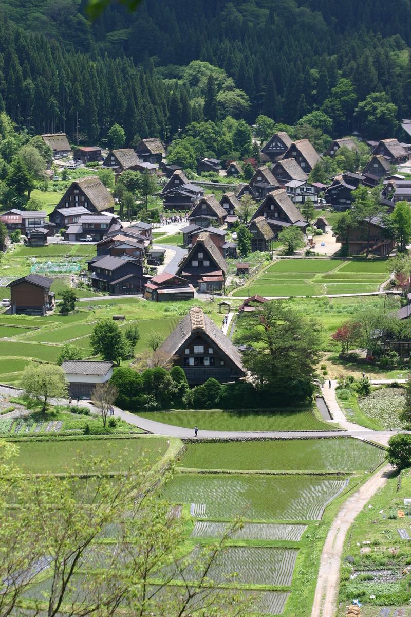 田園のなかに点在する合掌造りの民家 昔話のような日本の原風景がここに ~世界遺産 白川郷~ ④