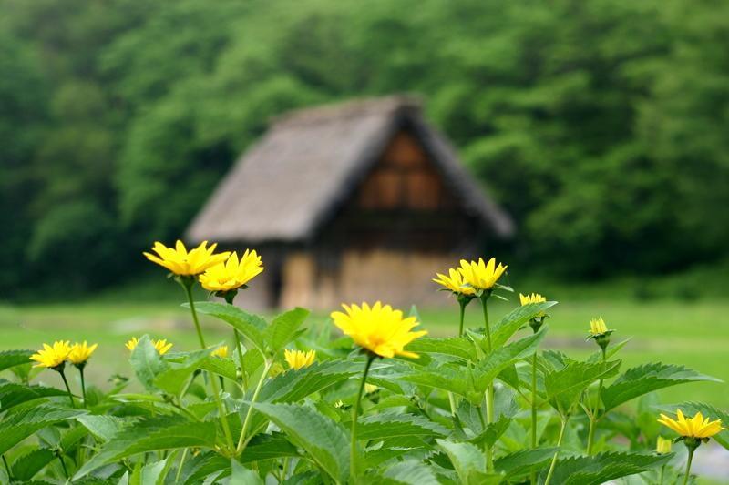 古き良き日本を感じる白川郷の合掌造り集落、良質な温泉も楽しめるスポットも点在~ゆったり流れる時間とともに、心落ち着く散策を~ ②
