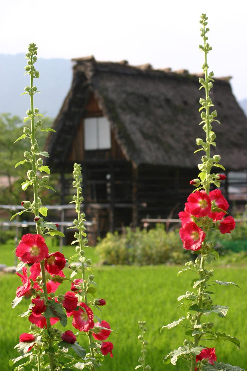 夏休み旅行計画♪ 今年も暑~い夏がやって参ります! 7月連休は正に避暑地に相応しい白川郷で過ごしてみませんか? ⑤