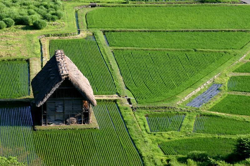 ~懐かしい日本の夏~ 夏のあの時・・・思い出す風景がある 世界遺産 白川郷合掌集落 ①