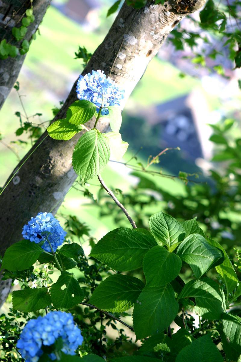 ~懐かしい日本の夏~ 夏のあの時・・・思い出す風景がある 世界遺産 白川郷合掌集落 ②