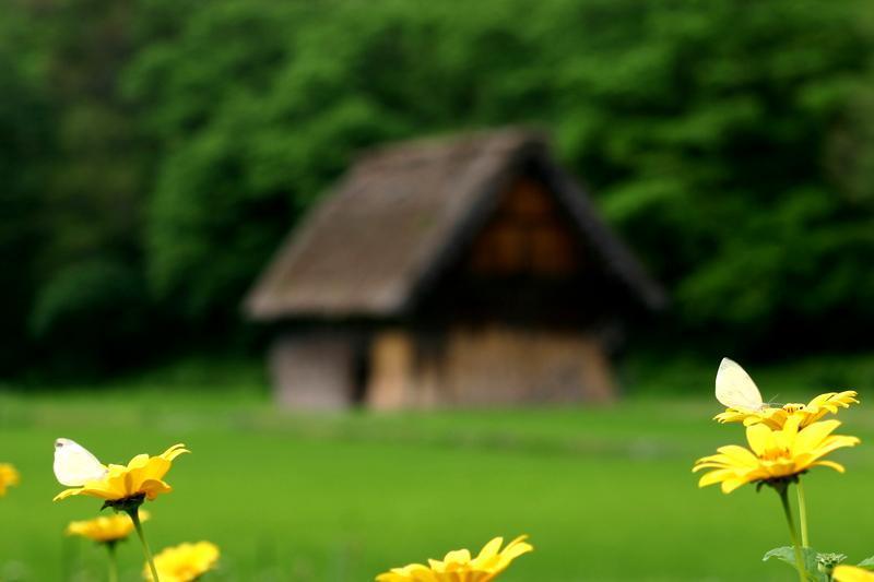 白川郷(日本の原風景が広がる世界遺産の合掌造りを散策) ④