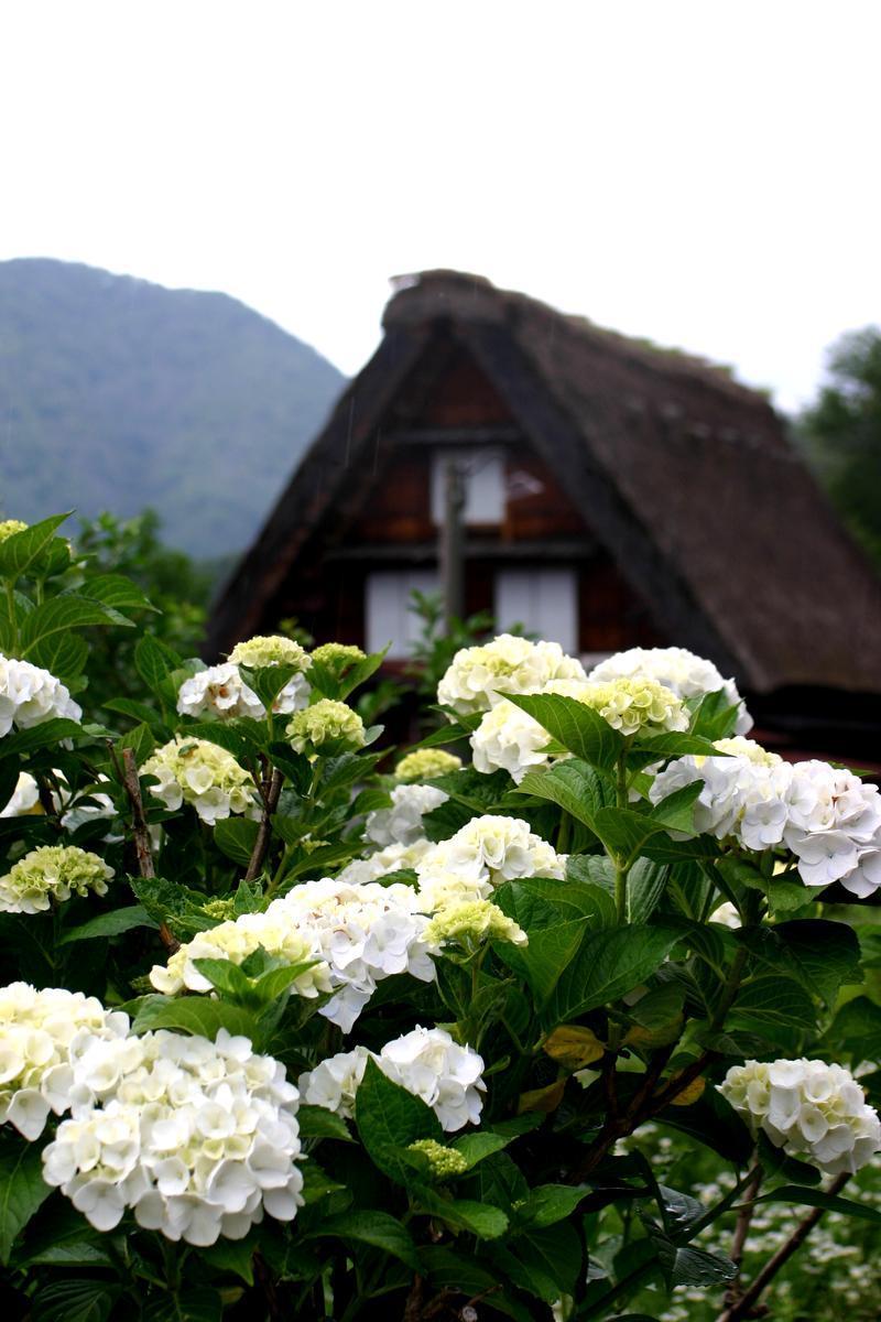 梅雨明けが待ち遠しい~晴れれば雨上がりも最高の景色が広がります~世界遺産 白川郷 ⑤