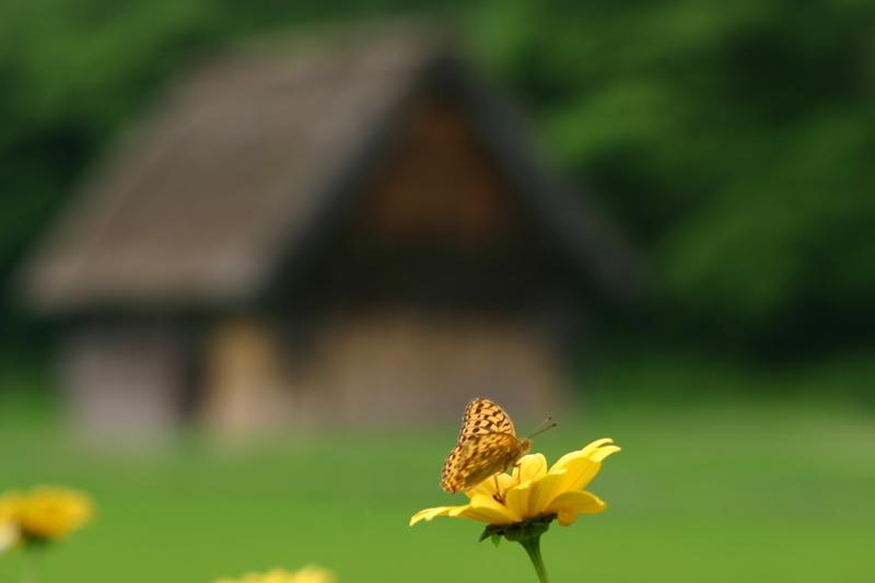 この梅雨が明ければ、季節は夏(^O^)/今年こそは前もって旅行計画をして充実した夏休みを。。世界遺産 白川郷 ③