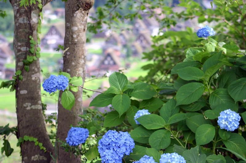 今年の夏は世界遺産 白川郷に行こう!大自然、合掌造り、など見所満載の白川郷。発見しょう~まだまだ知らない白川郷の魅力を! ①