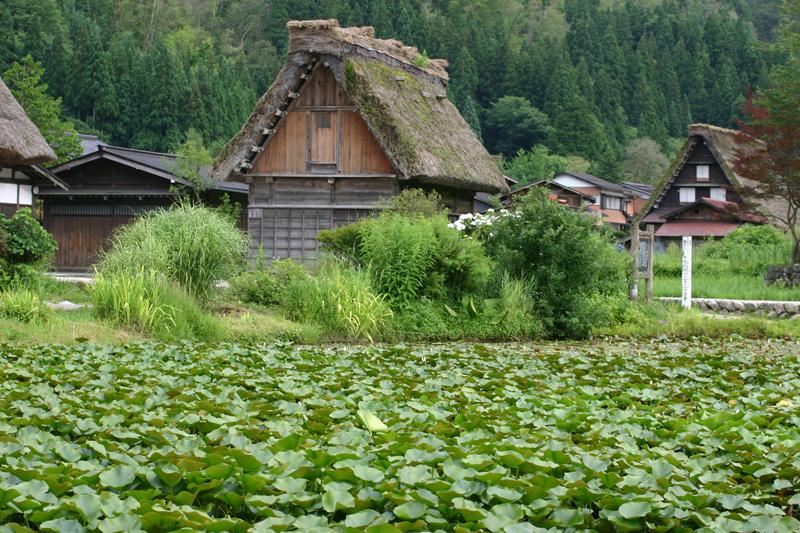 今年の夏は世界遺産 白川郷に行こう!大自然、合掌造り、など見所満載の白川郷。発見しょう~まだまだ知らない白川郷の魅力を! ④