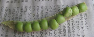 グリーンピース02