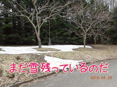 2014042801.jpg
