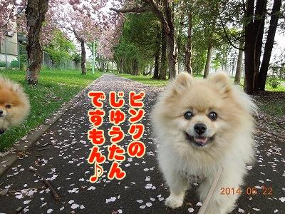 2014052201.jpg