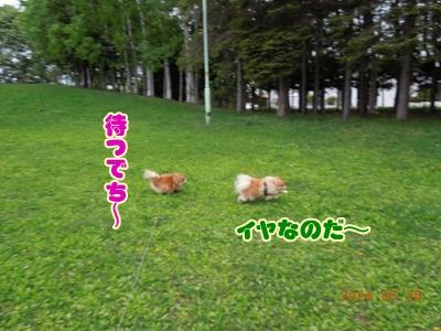 2014052602.jpg