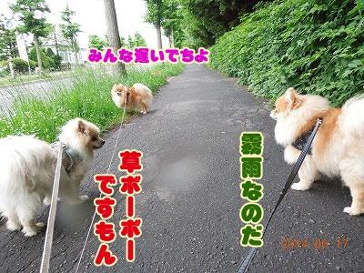 2014061701.jpg