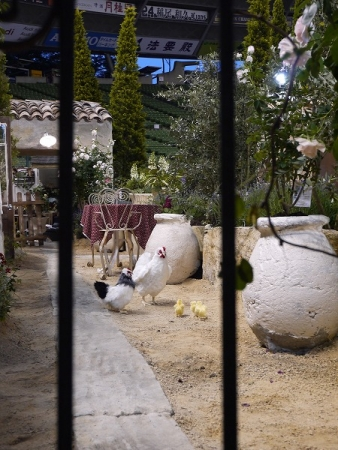プロバンスのお庭