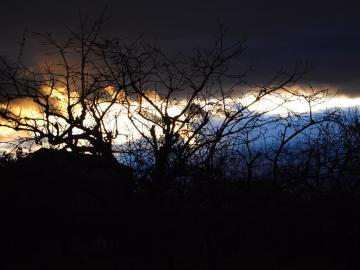 夜景柿の木