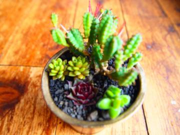 植物4・20