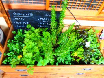植物4・20 1
