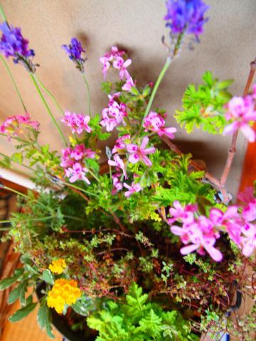 植物4・20 3