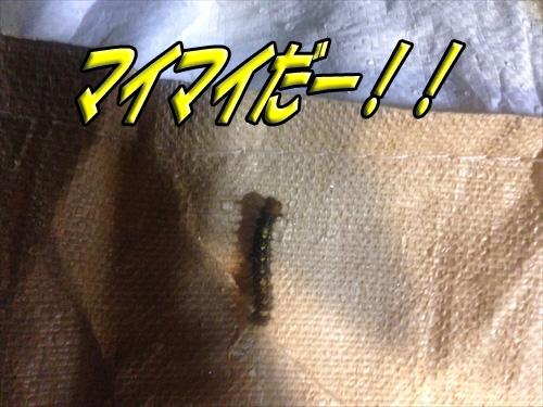 雪匠inTOKYO_2014『6月27日』 (247)_R