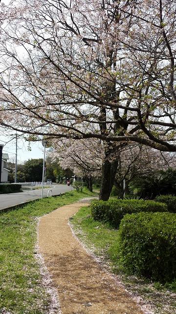 40K桜3