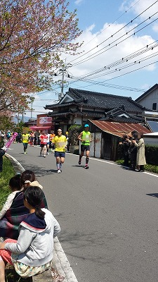 さが桜2014 40K2