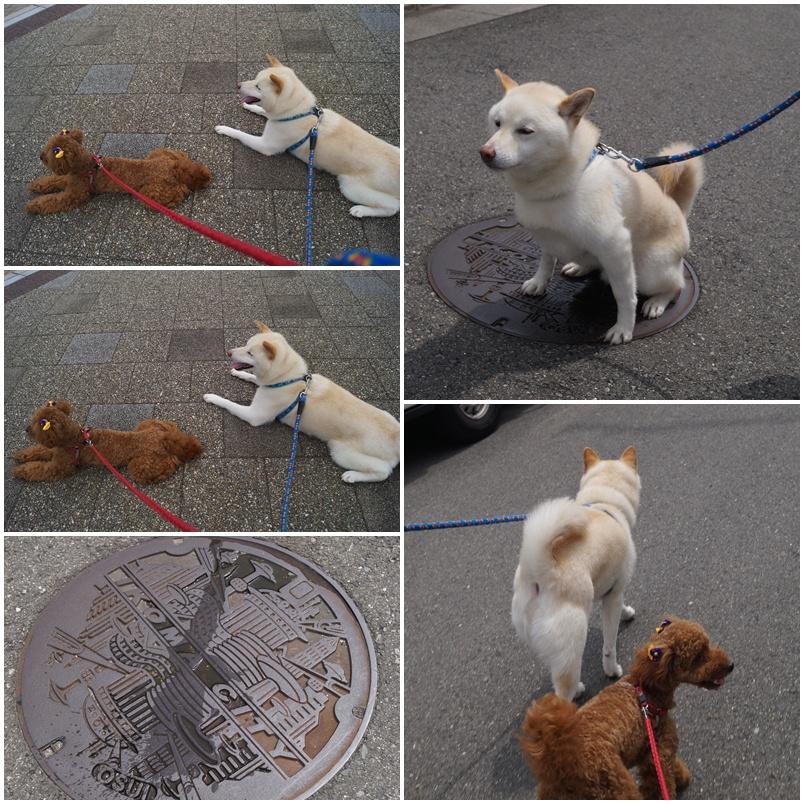 朝のお散歩♪2