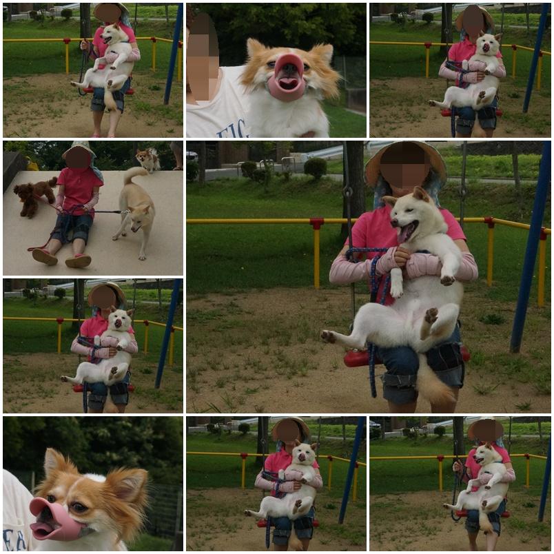 プリンちゃんと一緒に総合公園!3