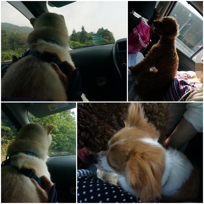 琵琶湖に向かう車の中