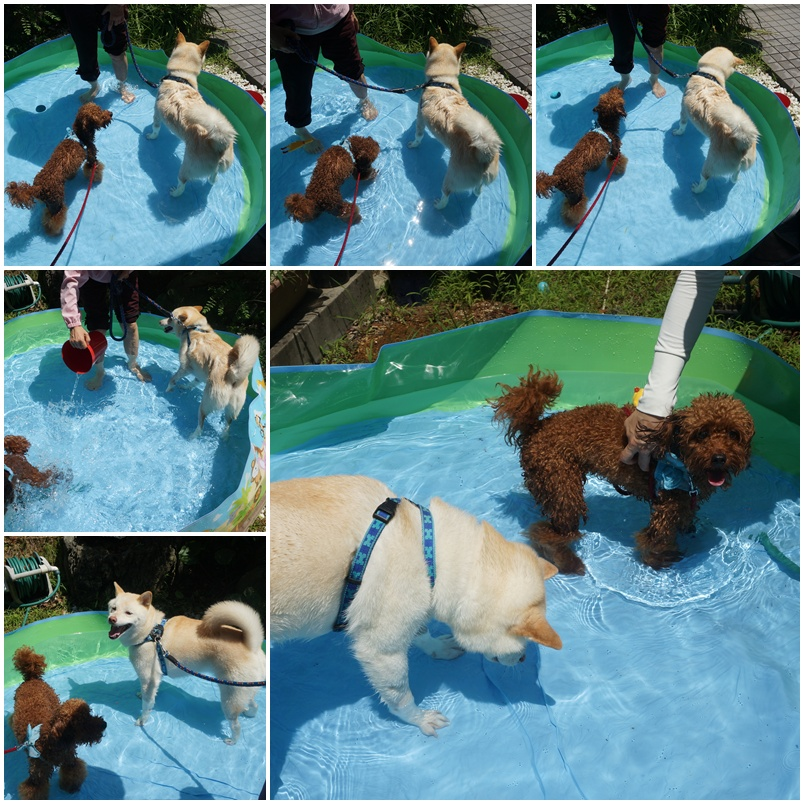 プール遊び。。。4