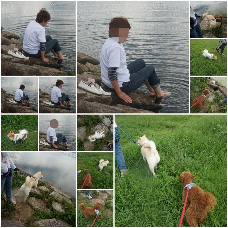 琵琶湖の湖畔