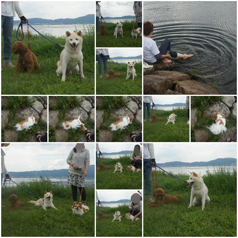 琵琶湖の湖畔2