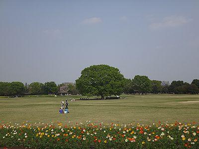 poppy201404a.jpg