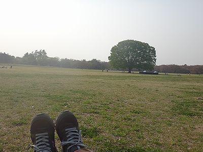 sakuraice201404c.jpg