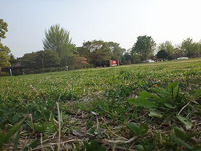 sakuraice201404e.jpg