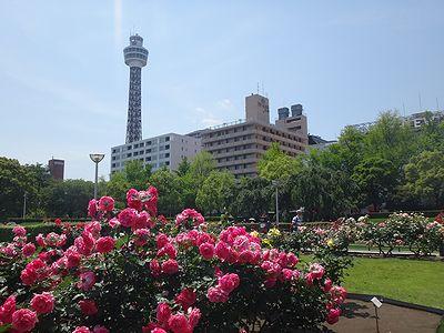 yamasita201405a.jpg