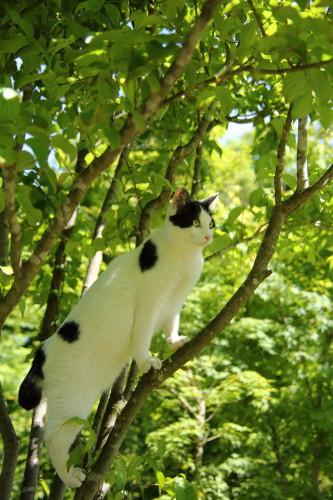 木の上のうーちゃん1
